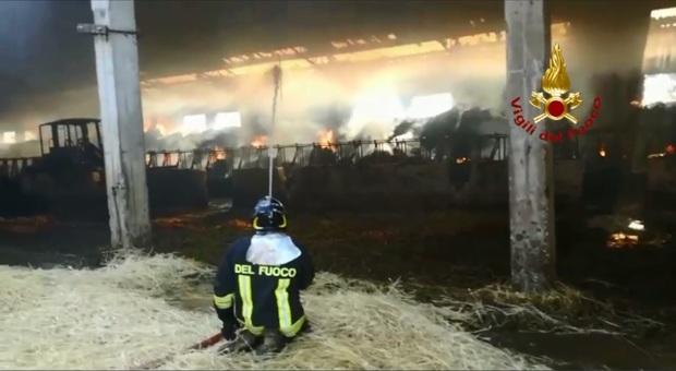 Castel di Lama, l'incendio devasta una stalla: i pompieri salvano 200 mucche