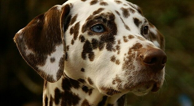 Montemonaco sostiene chi adotta un cane randagio