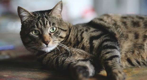 Coronavirus, morto un gatto che era stato disinfettato con la candeggina