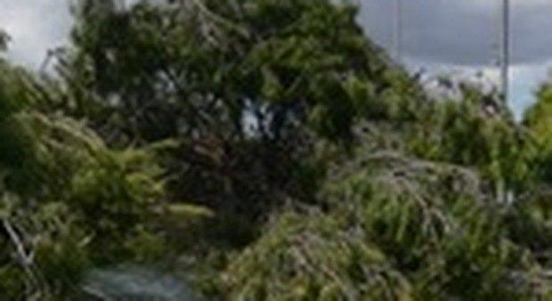 Osimo, lite per l'abero caduto: minaccia il vicino con la motosega