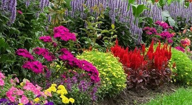 #ioresto a casa: in terrazza o in giardino, oggi pensate alle piante
