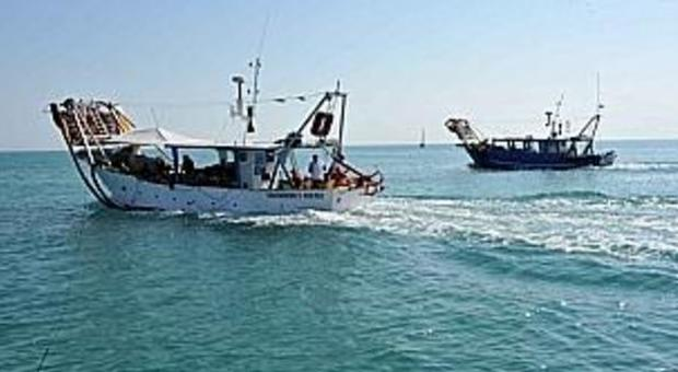 Ancona, la Cassazione annulla il sequestro Restituiti a Copemo 500 chili di vongole