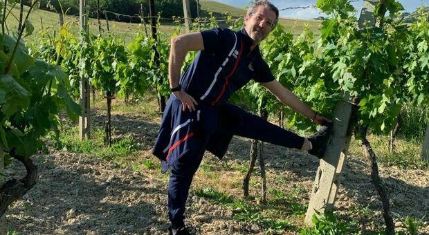 Il wine trainer Piero Viola nella vigna di Montemaggiore al Metauro