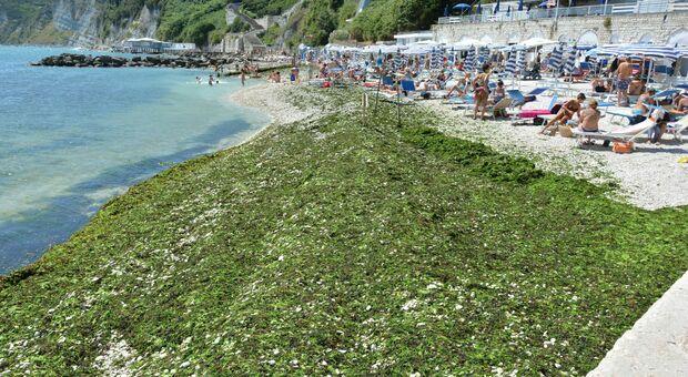 L'invasione di alghe al Passetto