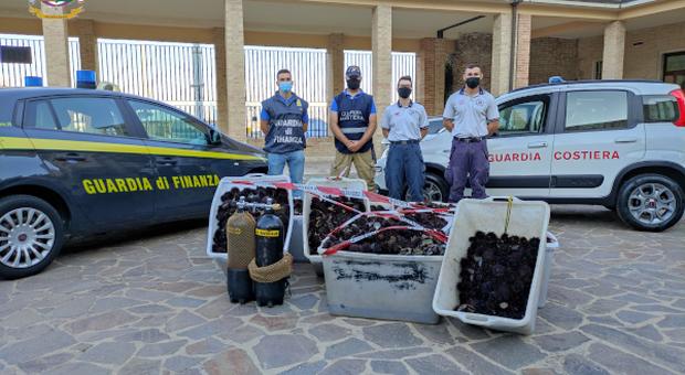 In trasferta dalla Puglia per pescare di frodo ricci di mare: in 6 ne avevano 12mila, maxi multa e sequestri