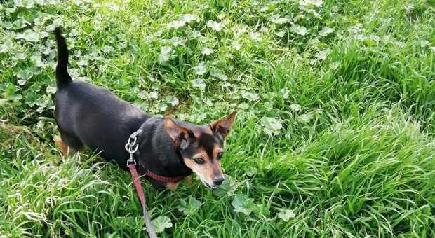 """Uno dei cani seguiti dall'associazione """"L'amico fedele"""""""