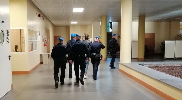 San Lorenzo in Campo, omicidio Grilli, l'imputato chiede di vedere i cani in carcere: il chiwawa può, il pitbull no