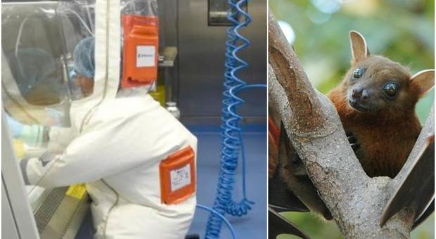 Wuhan, il piano degli scienziati 18 mesi prima della pandemia: «Infettare i pipistrelli con il virus potenziato»