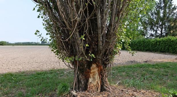 Lei vuole separarsi, il marito l'appende a un albero e le lega una corda al collo: arrestato per tentato omicidio