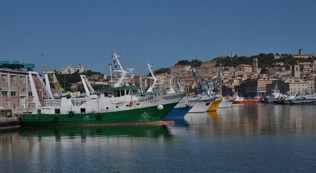 Pescherecci al molo di Ancona