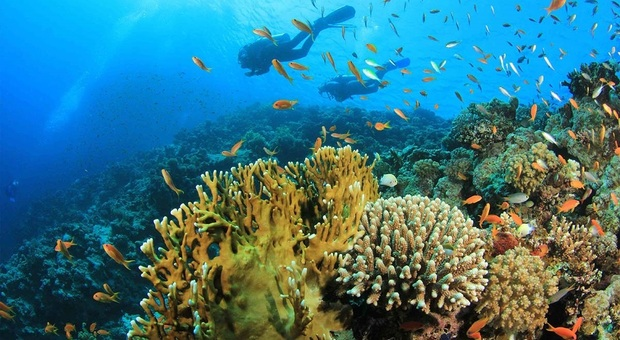Providenciales e la sua Grace Bay gli splendidi segreti dei Caraibi