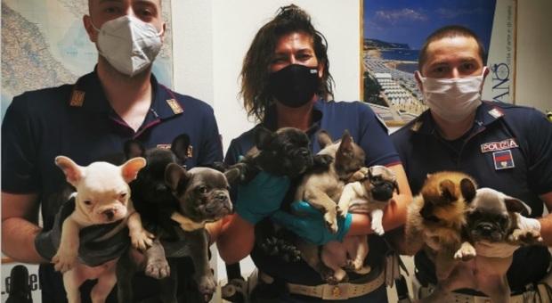I cuccioli sequestrati dalla polizia stradale