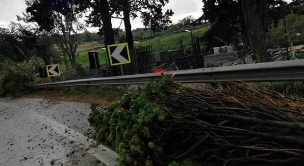 Tromba d'aria nella notte, le raffiche di vento fanno cadere alberi sulle strade, compresa l'A14