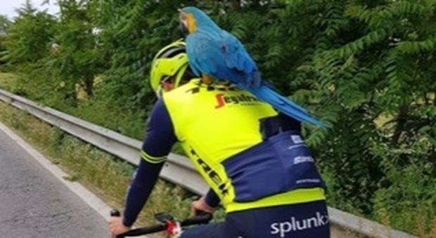 Il fratello di Vincenzo Nibali si allena a Filottrano con Franky, il papagallo amico di Michele Scarponi