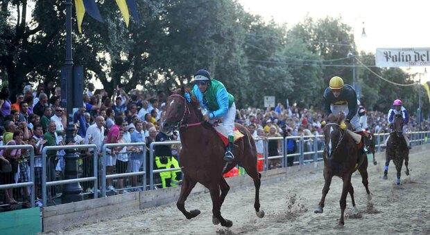Scelti i cavalli per la Cavalcata dell'Assunta: conto alla rovescia per la sfida di Ferragosto