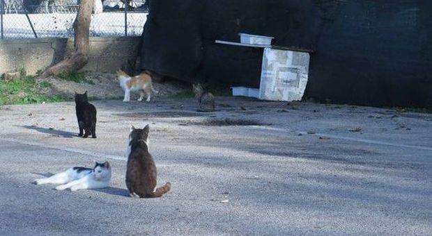 """""""Catturavano i gatti con sacchi e retini"""""""