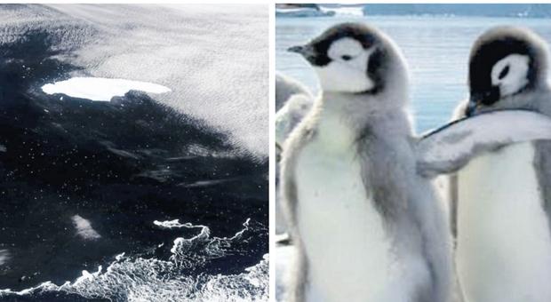 Clima pazzo, iceberg alla deriva: si rischia una strage di pinguini e foche