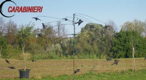 Pesaro, una giostra elettrica con uccelli finti per attirare le prede: tre cacciatori denunciati