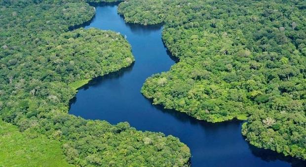 In cerca dei fantastici delfini rosa nel gigante Rio delle Amazzoni
