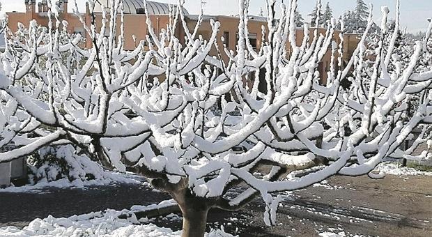 Pesaro, aprile con la neve? Solo tre volte in 130 anni: «Ma ora è allarme per l'agricoltura»
