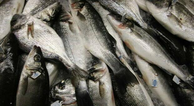 Tracce di coronavirus nel pesce surgelato: caos in Cina, la dogana sospende le importazioni