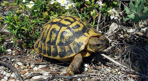 E' stata assolta la 71enne amante delle tartarughe