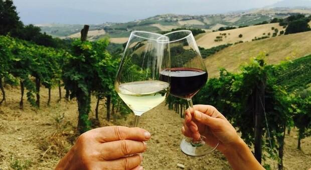 Ecco il vino che fa immagine: la legge sull enoturismo. Le Marche si esaltano ancora attraverso le numerose eccellenze del territorio