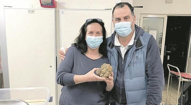 """Acqualagna, Fiera cancellata dal Covid, ma il tartufo bianco c'è eccome: trovato un """"campione"""" da 7 etti"""