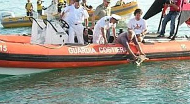 Domani il Tarta-day dedicato a Caretta caretta nel Mediterraneo