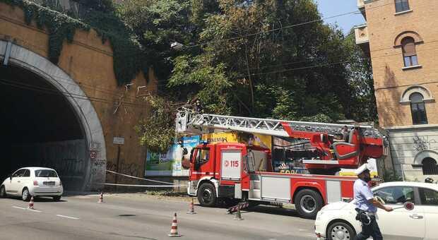 L'intervento dei vigili del fuoco per l'albero caduto