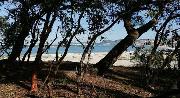 Ripulita e messa in sicurezza l'area verde sulla spiaggia di Villanova: domani l'ultima fase dei lavori