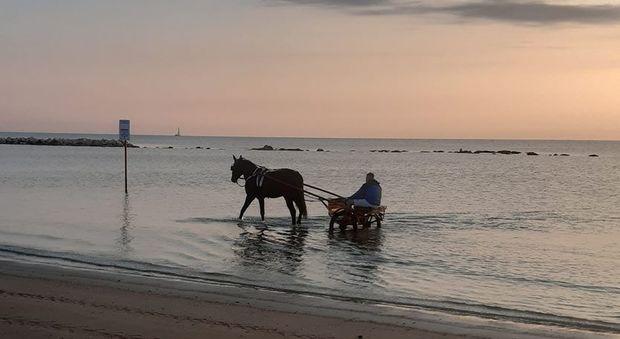 Rom in mare con il calesse, supermulta perchè sporca l'acqua
