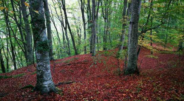 Il bosco di Tecchie, uno dei dieci boschi monumentali