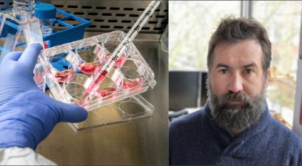 Covid, il «nuovo virus» di Londra. Gilestro (Imperial College): «Molto più contagioso, sfugge agli anticorpi»