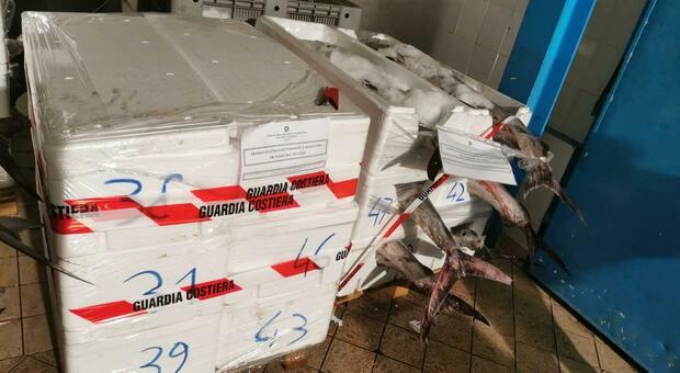 Il tonno sequestrato a Fano