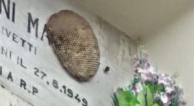 Chiaravalle, invasione di vespe e piccioni: «Il cimitero è abbandonato» - Corriere Adriatico