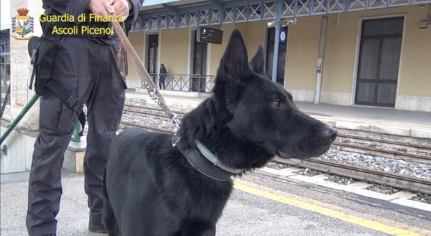 I controlli della Guardia di finanza di Ascoli alla stazione con i cani anti-droga
