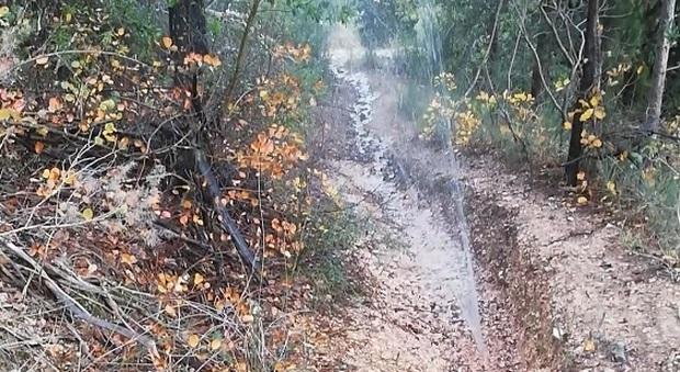 La rottura della condotta idrica nella riserva della Gola del Furlo