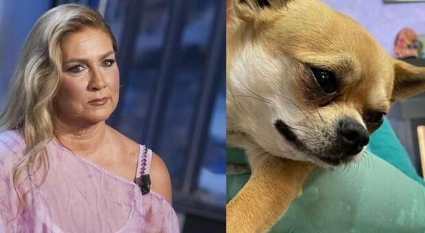 Romina Power in ansia per il piccolo Taquito: il volto sofferente del cagnolino su Instagram