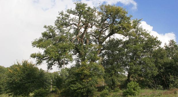 La mappa degli alberi secolari nelle Marche