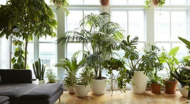 Il mese di maggio ideale per sistemare piante e balconi