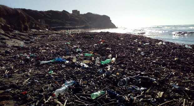 Plastica in mare, scoperti crostacei in grado di frammentarla in 4 giorni. «Ma è pericoloso per l'uomo»
