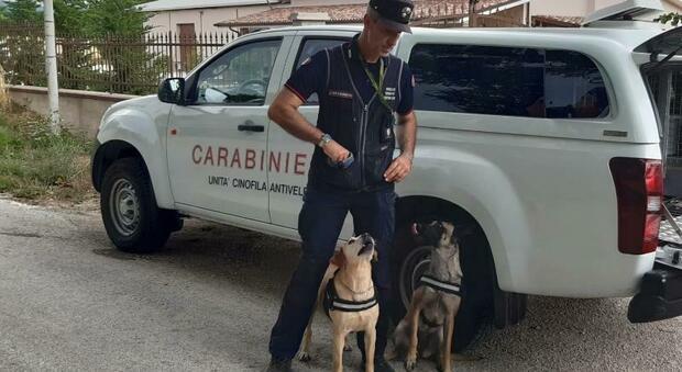 Campagna disseminata di bocconi avvelenati letali per cani e animali selvatici, ma attenzione anche ai bambini