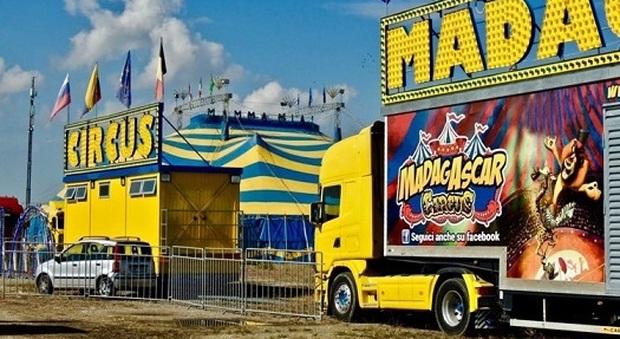 Da Ascoli Piceno la disperazione del Circo Madagascar: «Siamo allo stremo, aiutateci»