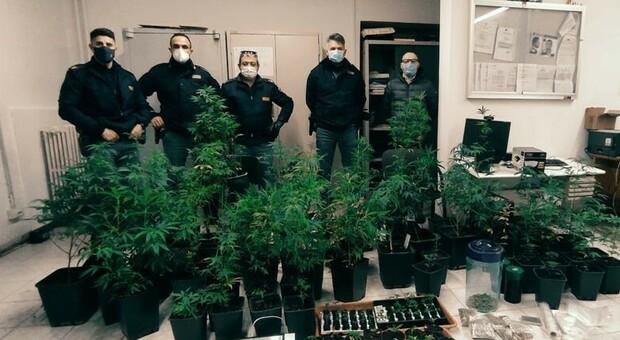Pesaro, Capre, galline e marijuana: due arrestati per la piantagione nel casolare occupato abusivamente