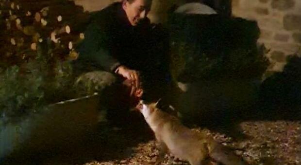 Piergiorgio e Gina: l'insolita amicizia tra la volpe e il ristoratore che si rinnova ogni sera