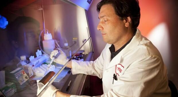Il virologo Silvestri avverte: «Venti giorni per gli effetti della variante in Inghilterra»