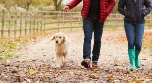 Covid, coppia multata per aver portato a spasso il cane: «Usciti dopo il coprifuoco». Polemica in Canada