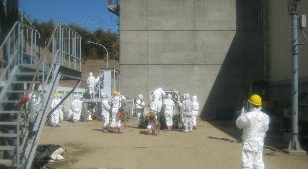 L'acqua contaminata di Fukushima e i pesci che un giorno mangeremo