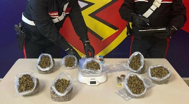 Nascondeva oltre mezzo chilo di marijuana in cantina: trentenne anconetano incensurato in manette